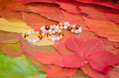 Background of autumn leaves, colorful leaves, pearls. Background of autumn leaves, pearl necklace Stock Photos
