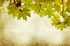 Background with autumn leaves and copy space Royalty Free Stock Image