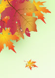 Background from autumn leaves . Background from autumn leaves and drops Stock Images
