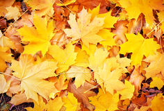 Background from autumn leaves. Stock Photography