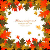 Background autumn leaves frame Royalty Free Stock Photos