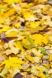 Background of autumn leaves Royalty Free Stock Photos