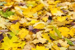Background of autumn leaves Stock Images