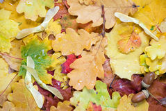 Background of autumn leaves Stock Photos