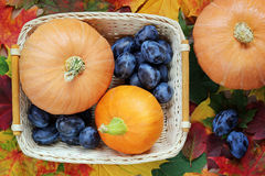 Background with autumn leaves, pumpkins and plums. Top view, table still life. Food Royalty Free Stock Images