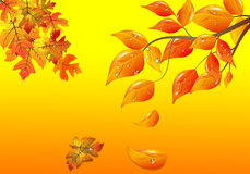 Background from autumn leaves . Background from autumn leaves and rain drops Royalty Free Stock Images