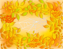 Background of autumn leaves, rowan and web  Royalty Free Stock Image