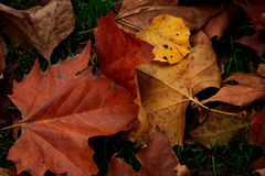 Background of autumn leaves royalty free stock photography