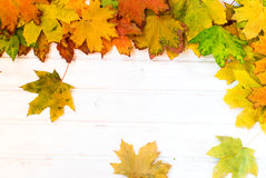 A background with autumn leaves yellowed Royalty Free Stock Image