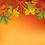 Background with autumn maple leaves, hand-drawing Stock Photography