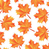 Background autumn maple leaves. Illustration vector illustration