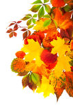 Background from autumn multi colored leaves Stock Images