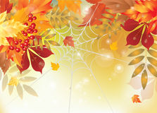 Background autumn spider web Royalty Free Stock Photos