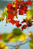 Background of autumnal  colora Royalty Free Stock Photos