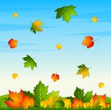 Background with autumnal leaves. Royalty Free Stock Photo