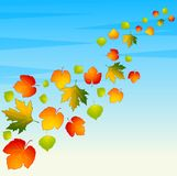 Background with autumnal leaves. Royalty Free Stock Images