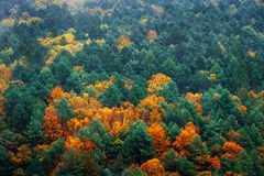 Background of autumnal trees textures royalty free stock photo