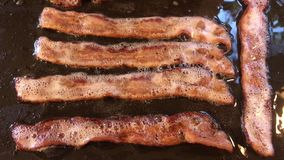 Cooking Bacon on Griddle stock video