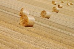 Background of bales of hay. In farmlands Royalty Free Stock Photo