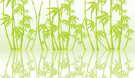 Background with a bamboo. Beautiful  background with a bamboo Stock Photo