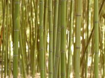 Background of bamboo Royalty Free Stock Images