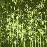 Background with bamboo. Royalty Free Stock Photography