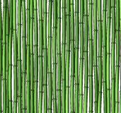 Background with a bamboo. Bamboo branches, stalks Stock Photo