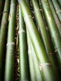 Background, Bamboo, Close-up Stock Photo