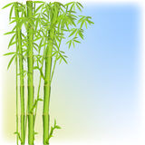 Background with a bamboo Stock Images