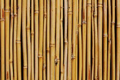 Background of  bamboo fence. Background of  yellow bamboo fence Stock Images