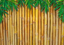 Background Of A Bamboo Fence  with bamboo-leaves Stock Photography
