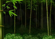 Background bamboo forest at night Stock Photography