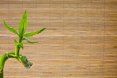 Background of bamboo fresh green leaf on mat texture. Eco background Stock Images