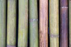 Background bamboo Royalty Free Stock Photos