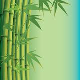 Background with bamboo leaves and stems Stock Photography