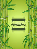 Background with bamboo plants and leaves. Royalty Free Stock Image