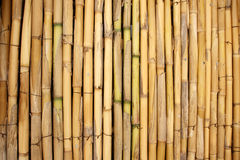 Background of bamboo stalks. Decorative background of dry yellow bamboo stalks Stock Photo