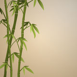 Background with bamboo stems Stock Image