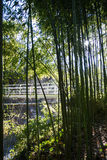A background with bamboo stems and leaves. A white bridge and the sky at Tbilisi botanical garden, Georgia, Caucasus mountains Stock Photos