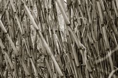 Background of bamboo texture in black and white royalty free stock image