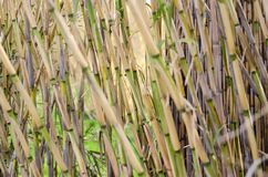Background of bamboo texture stock images