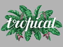 Background with banana leaves. Decorative image of tropical foliage, flowers and fruits. Design for advertising booklets Royalty Free Stock Photo