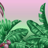 Background with banana leaves. Decorative image of tropical foliage, flowers and fruits. Design for advertising booklets Stock Image