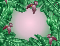 Background with banana leaves. Decorative image of tropical foliage, flowers and fruits. Design for advertising booklets Stock Photography