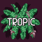 Background with banana leaves. Decorative image of tropical foliage, flowers and fruits. Design for advertising booklets Royalty Free Stock Image
