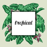 Background with banana leaves. Decorative image of tropical foliage, flowers and fruits. Design Image for advertising Stock Photography