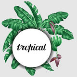 Background with banana leaves. Decorative image of tropical foliage, flowers and fruits. Design Image for advertising Royalty Free Stock Photos