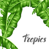 Background with banana leaves. Image of decorative tropical foliage Stock Photos