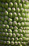 Background from banana. In thailand Stock Photography