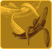 Background with bananas, hand-drawing. Vector illu Royalty Free Stock Images
